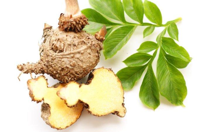 ریشه گیاه کون نیاکو که در مکمل کاهش وزن گلوکومانان استفاده می شود، توصیه دیگری در رژیم لاغری رایگان است