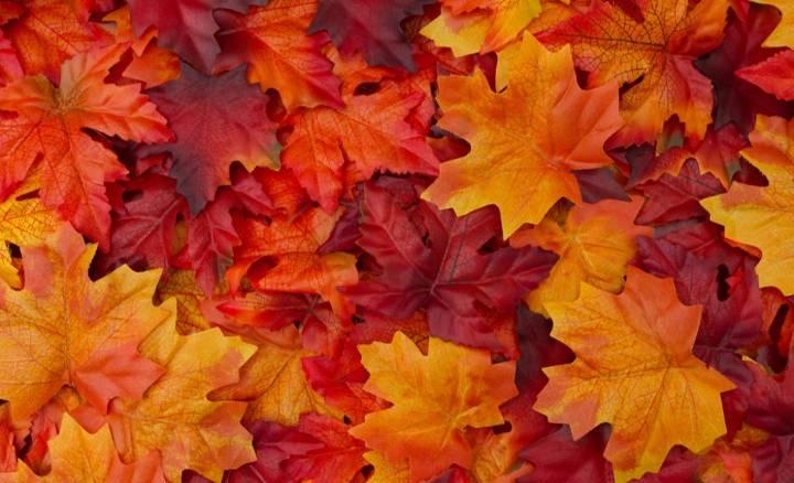 درستکردن کاردستی هنری با برگهای پاییزی