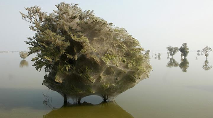درختان اشباح تار بسته در پاکستان - عجیبترین جاذبههای طبیعی دنیا