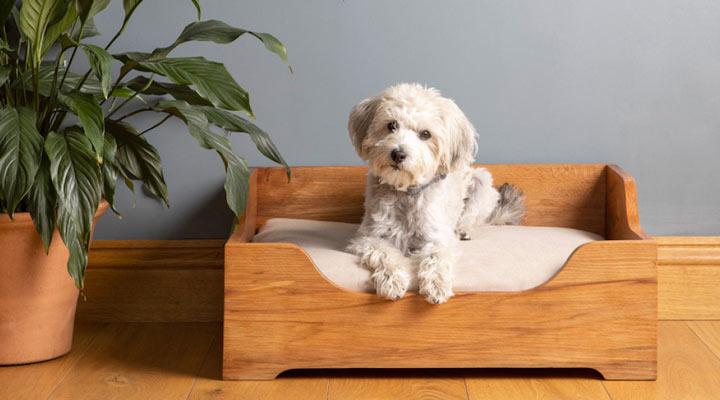 هزینه نگهداری سگ - تخت خواب سگ