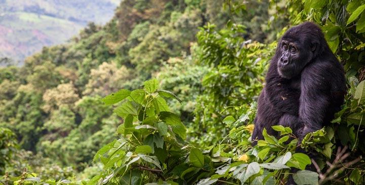پارک ملی غیر قابل نفوذ بویندی از جاهای دیدنی آفریقا