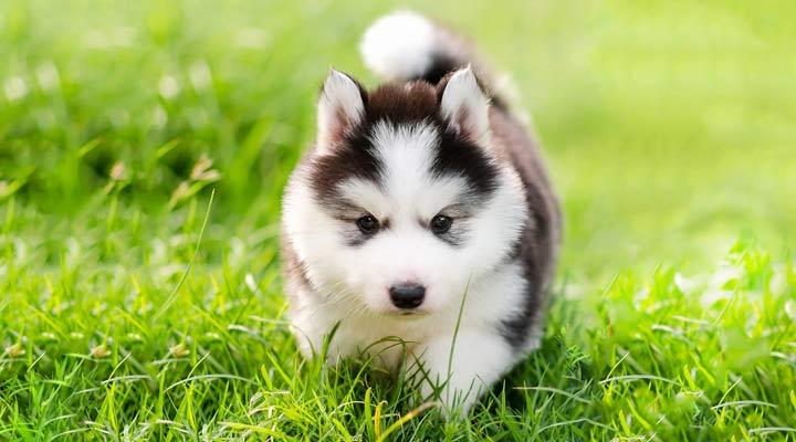 هزینه نگهداری سگ - خرید سگ