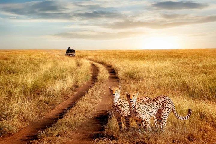 پارک ملی سرنگتی از جاهای دیدنی آفریقا