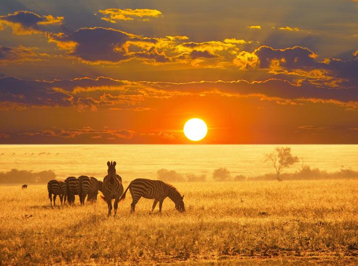 پارک ملی اتوشا از جاذبه های گردشگری قاره آفریقا