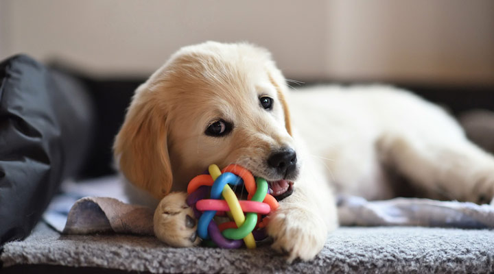هزینه نگهداری سگ - اسباب بازی سگ