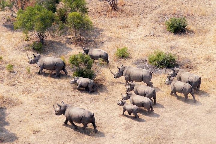 پارک ملی کروگر از جاذبه های گردشگری قاره آفریقا