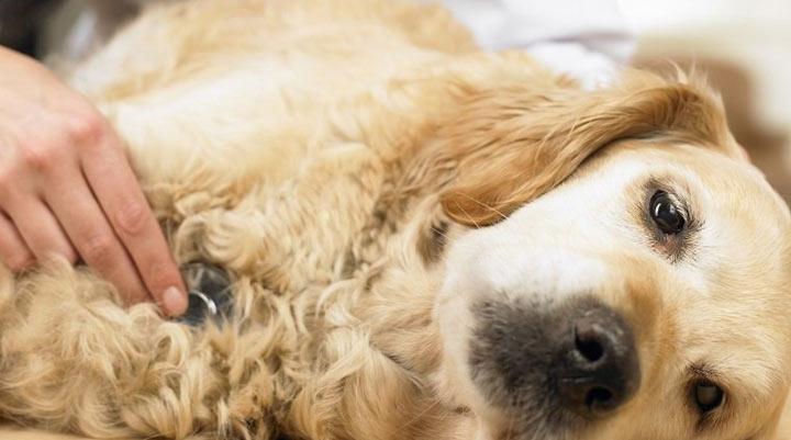 هزینه نگهداری سگ - هزینه پزشکی سگ