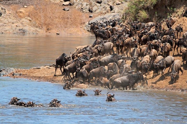 ذخیرهگاه ملی ماسایی مارا از جاذبه های گردشگری قاره آفریقا