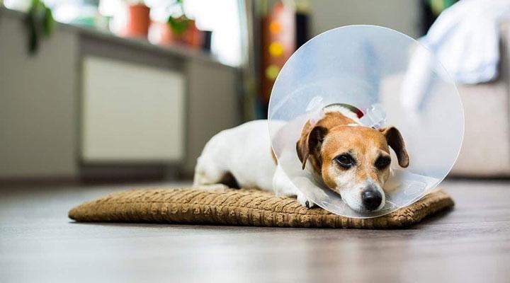 هزینه نگهداری سگ - هزینه عقیمسازی سگ