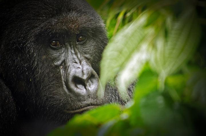 پارک ملی ویرونگا از جاذبه های گردشگری قاره آفریقا