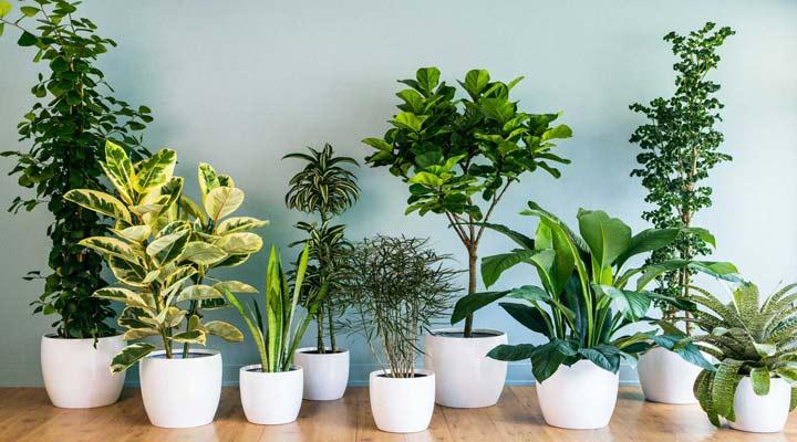 گیاهان را قبل از آوردن به خانه بررسی کنید