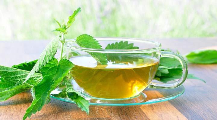 ۱۲ دمنوش برای سرماخوردگی - چای گزنه در تقویت دستگاه ایمنی موثر است.