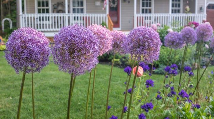 با کاشت بعضی از گیاهان در حیاط حشرات را از گیاهان دیگر دور نگه دارید