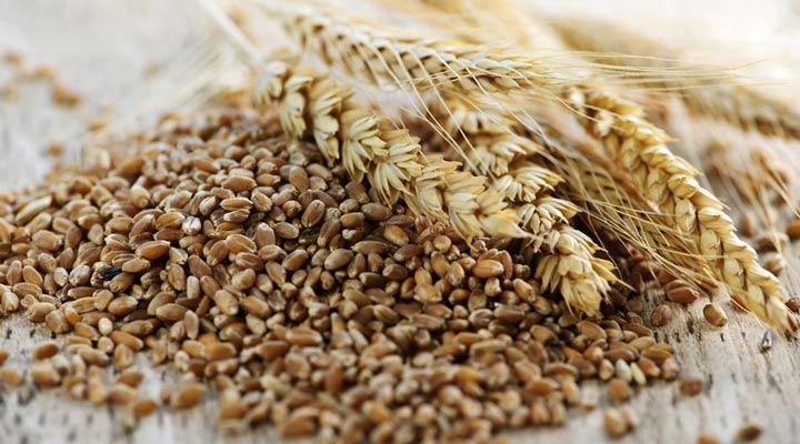 سبوس گندم از بهترین منابع پری بیوتیک محسوب میشود.