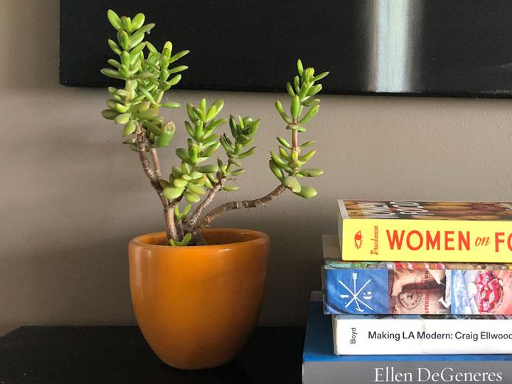 هدیه برای همکار - گل و گیاه