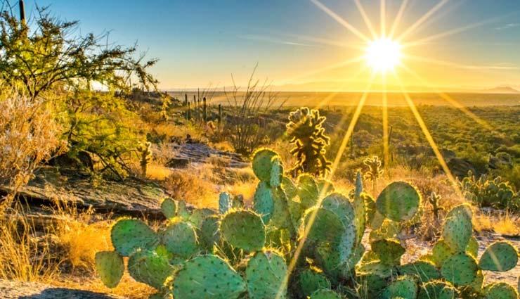 آفتاب سوختگی گیاهان
