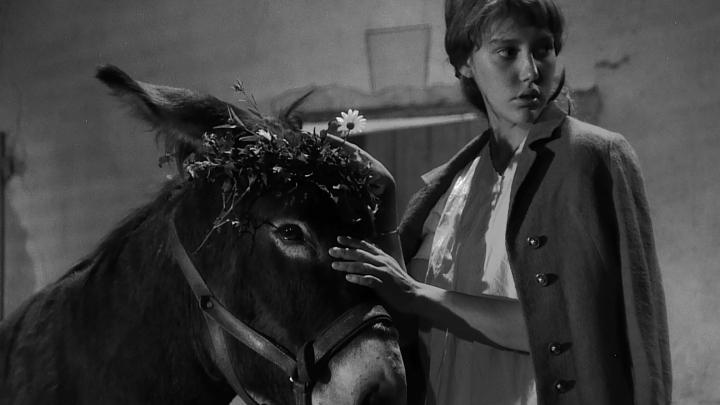 فیلم Au Hasard Balthazar (ناگهان بالتازار) از بهترین فیلم های فرانسوی